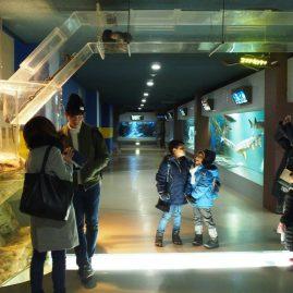 Otaru Aquarium::Family