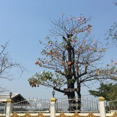 ต้นไม้ วัดบางนานอก