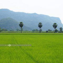 Uthai Nature Trip::Resort