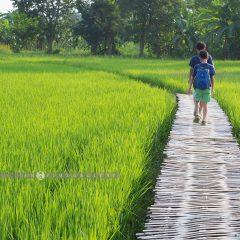 Baan Na Ton Chan::Family